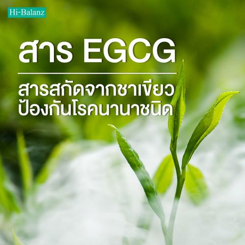 สาร EGCG ในสารสกัดจากชาเขียว (Green Tea Extract) เพื่อการป้องกันโรคนานาชนิด