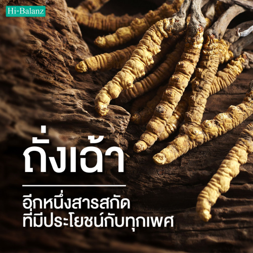 สารสกัดจากถั่งเฉ้า (Cordyceps Extract) อีกหนึ่งสารสกัดที่มีประโยชน์กับคนทุกเพศ