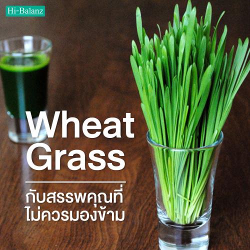 ต้นอ่อนข้าวสาลี (Wheat Grass) กับสรรพคุณที่ไม่ควรมองข้าม