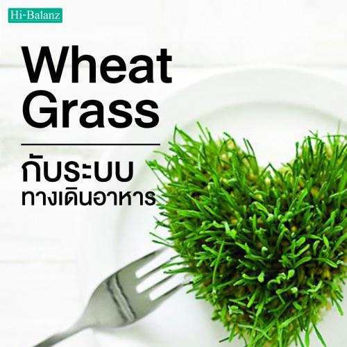 ประโยชน์ของต้นอ่อนข้าวสาลี (Wheat Grass) กับระบบทางเดินอาหาร