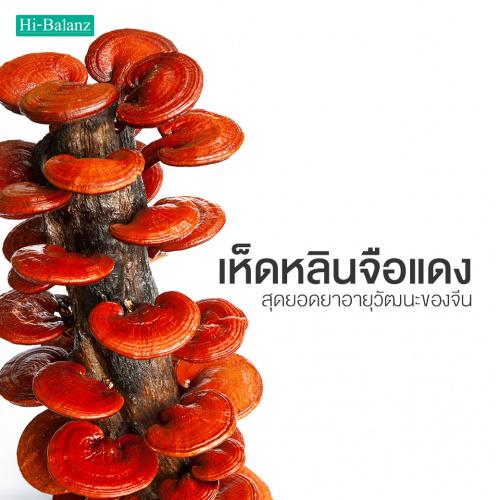 เห็ดหลินจือแดง สุดยอดยาอายุวัฒนะของจีน