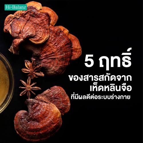 5 ฤทธิ์ของสารสกัดจากเห็ดหลินจือ (Reishi Extract) ที่มีผลดีต่อระบบร่างกาย