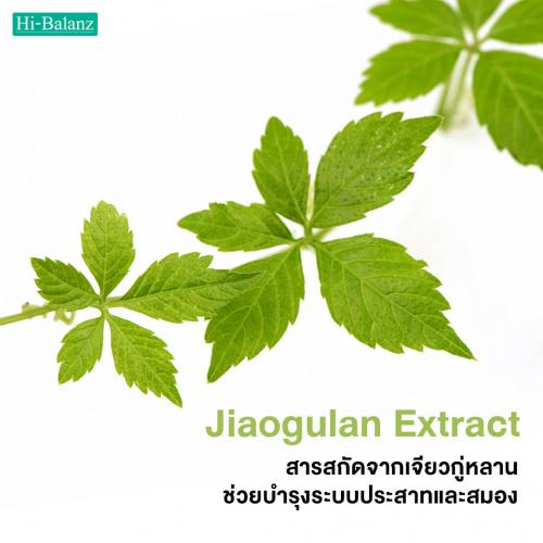 สารสกัดจากเจียวกู่หลานช่วยบำรุงระบบประสาทและสมอง (Jiaogulan Extract)