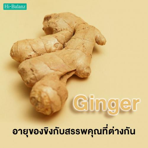 อายุของขิง (Ginger) กับสรรพคุณที่แตกต่างกัน