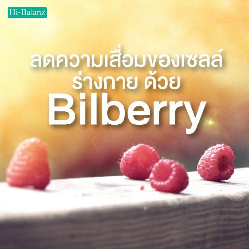 ลดความเสื่อมของเซลล์ร่างกาย ด้วยบิลเบอร์รี่ (Bilberry )
