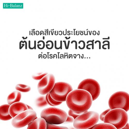 เลือดสีเขียว ประโยชน์ของต้นอ่อนข้าวสาลีต่อโรคโลหิตจาง