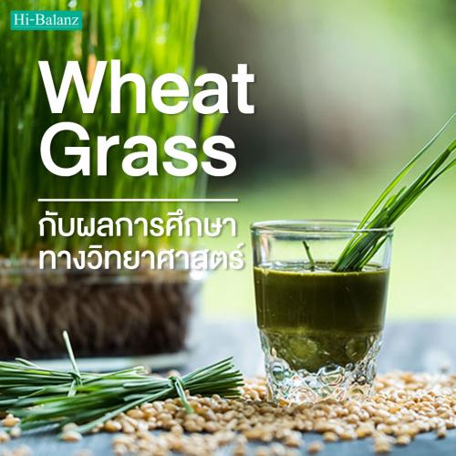 ต้นอ่อนข้าวสาลี (Wheat Grass) กับผลการศึกษาทางวิทยาศาสตร์