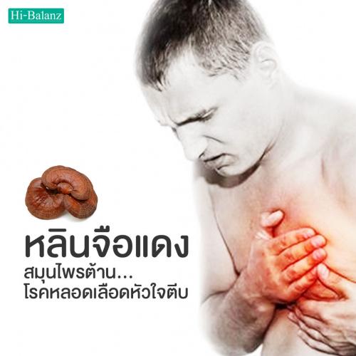 เห็ดหลินจือแดง สมุนไพรต้านโรคหลอดเลือดหัวใจตีบ