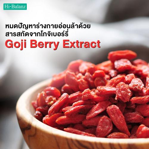 หมดปัญหาร่างกายอ่อนล้าด้วยจากสารสกัดจากโกจิเบอร์รี่ (Goji berry Extract)