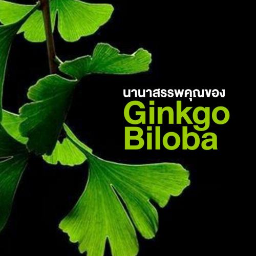 นานาสรรพคุณของใบแปะก๊วย (Ginkgo Biloba)