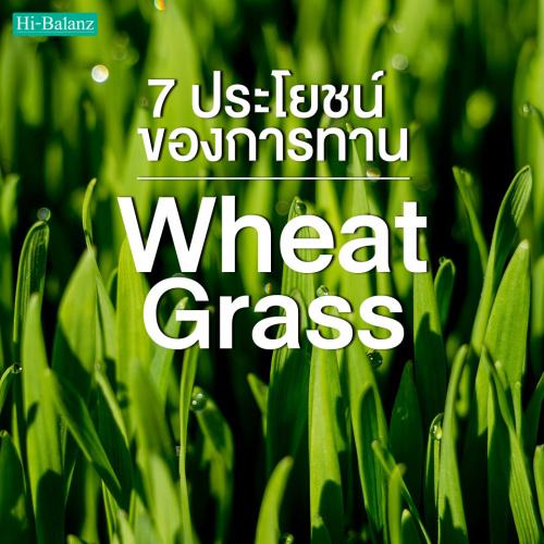 7 ประโยชน์ของการรับประทานต้นอ่อนข้าวสาลี (Wheat Grass)