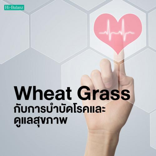 ต้นอ่อนข้าวสาลี (Wheat Grass) กับการบำบัดโรคและดูแลสุขภาพ