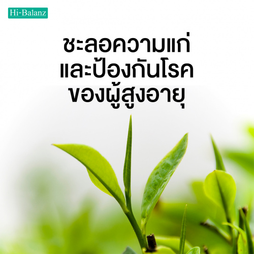 ชะลอความแก่และป้องกันโรคของผู้สูงอายุด้วยสารสกัดจากชาเขียว