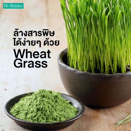ล้างสารพิษในร่างกายได้ง่ายๆ เพียงรับประทาน ต้นอ่อนข้าวสาลี (Wheat Grass)