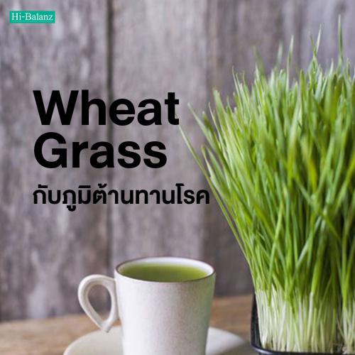 ต้นอ่อนข้าวสาลี (Wheat Grass) กับภูมิต้านทานโรค