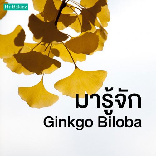 มารู้จัก ใบแปะก๊วย (Ginkgo Biloba) ตัวช่วยบำรุงสมองและป้องกันความจำเสื่อมจากธรรมชาติ