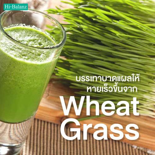 บรรเทาบาดแผลให้หายเร็วขึ้นจาก ต้นอ่อนข้าวสาลี (Wheat Grass)