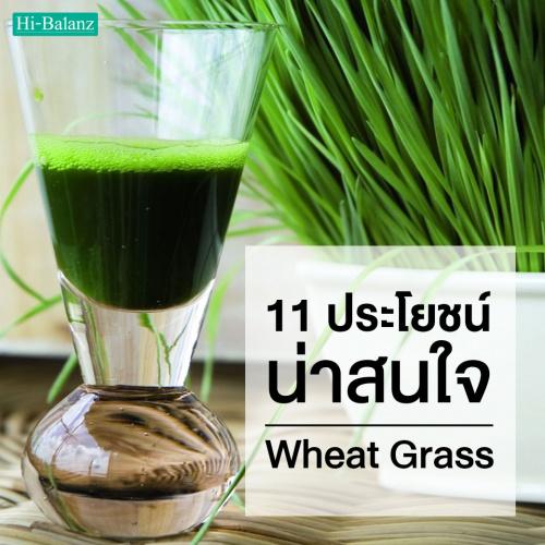 11 ประโยชน์น่าสนใจของต้นอ่อนข้าวสาลี (Wheat Grass) ที่มีต่อสุขภาพ