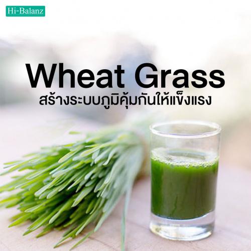 ต้นอ่อนข้าวสาลี (Wheat Grass) สร้างระบบภูมิคุ้มกันสุขภาพให้แข็งแรง