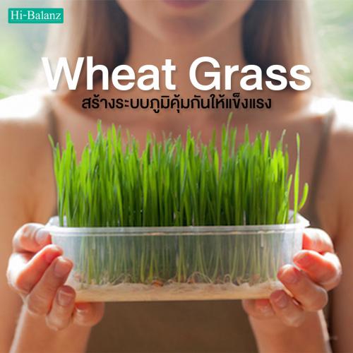 ต้นอ่อนข้าวสาลี (Wheat Grass) กับระบบเลือดในร่างกาย
